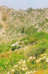 Το δυσπρόσιτο ασκητήριο του<br />Οσίου Θωμά του εν τω Μαλεώ<br />από μακριά (είναι η σπηλιά<br />στο κέντρο της<br />φωτογραφίας)
